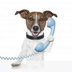 dog-on-phone-300x300