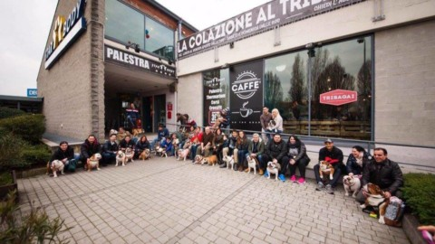 Raduno Bulldog Inglesi a Cesano Maderno