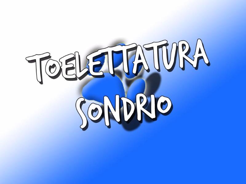 toelettatura-sondrio-colpo-di-coda-via-bosatta