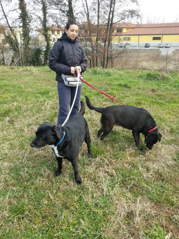 dog-sitting-walking-educazione-cinofila-pavia