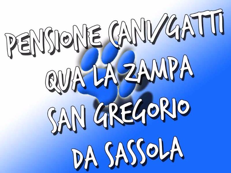 pensione-cani-gatti-san-gregorio-da-sassola-pet-sitter-roma-lazio