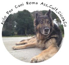 asilo-per-cani-roma-dog-sitter-pensione