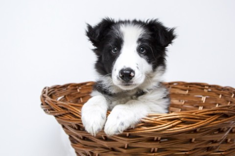 8 trucchi per fotografare meglio il tuo cane