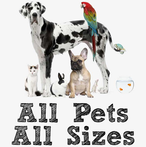 dog-sitter-pet-sitter-bologna