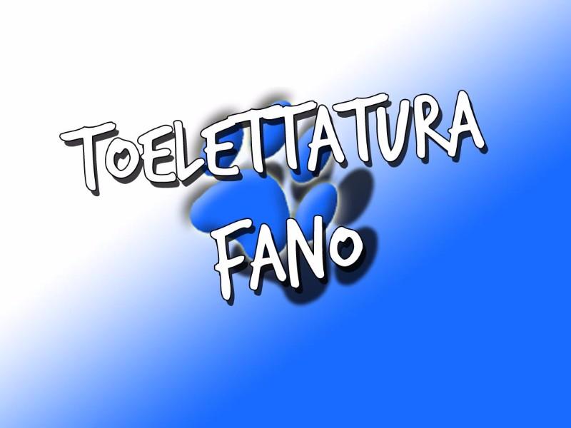 fano-caninoteca-toelettatura