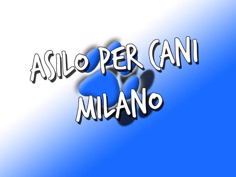 asilo-per-cani-milano-via-losanna-dog-sitter-happy-dog