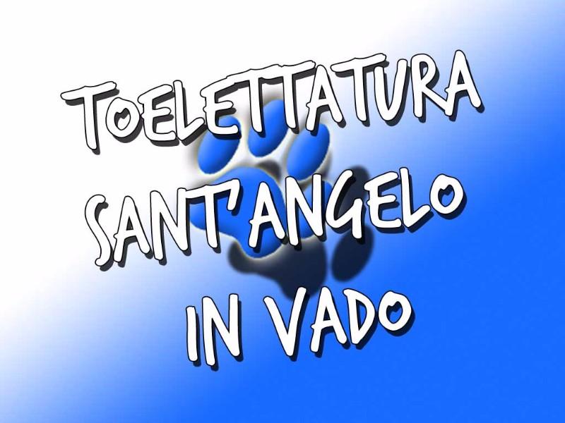 toelettatura-sant-angelo-in-vado-pesaro-urbino-toelettatore-toeletta-cane