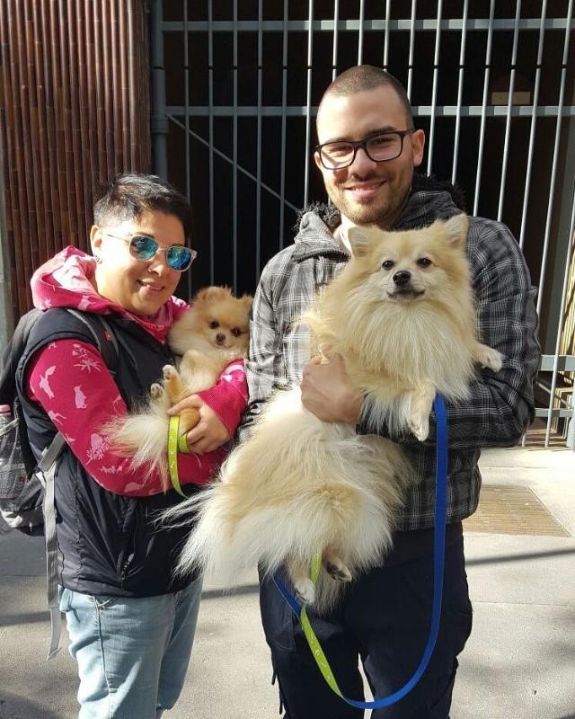 milano-pet-sitter-wedding-dog-viaggi-servizi-animali-domestici-dome-ale-trasporto