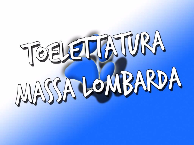 toelettatura-massa-lombarda-piazza-andrea-costa-ravenna