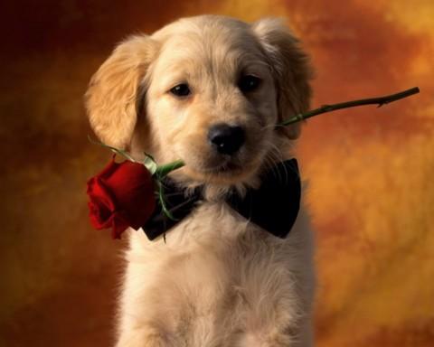 All you need is dog: i cani sono angeli a quattro zampe.