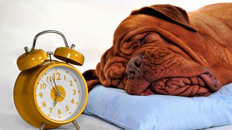 I cani sanno misurare il tempo