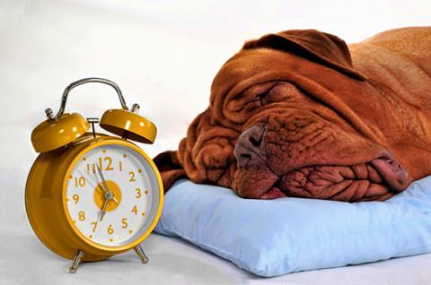 Sì, i cani sanno misurare il tempo