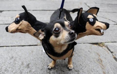 Halloween: alcune idee per mascherare il tuo cane!