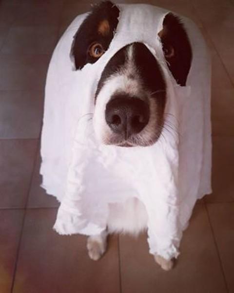 15 cani che hanno stravinto Halloween