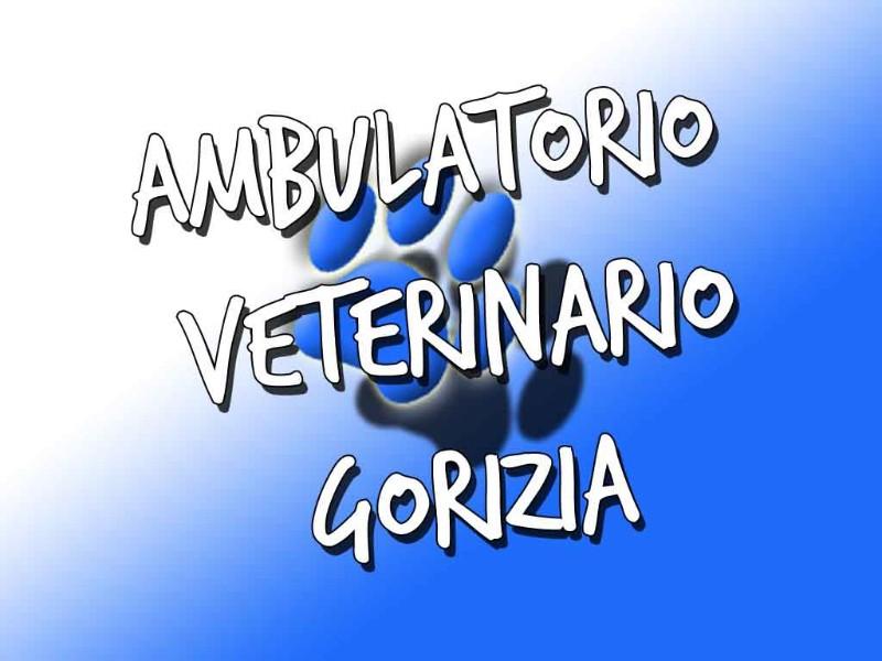 ambulatorio-veterinario-san-rocco-gorizia