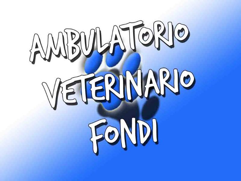 veterinario-latina-fondi-medicina-generale-interna-ortopedia-roma