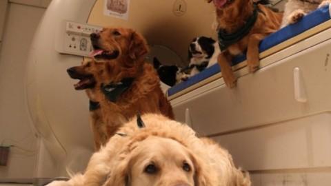 I cani comprendono quello che diciamo e come lo diciamo