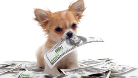 20 prodotti per cani SCONTATI su Amazon fino al 70%