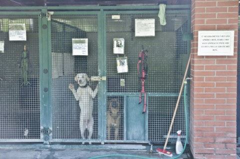 Palermo: dal Comune incentivi fino a 480 euro per chi adotta un cane