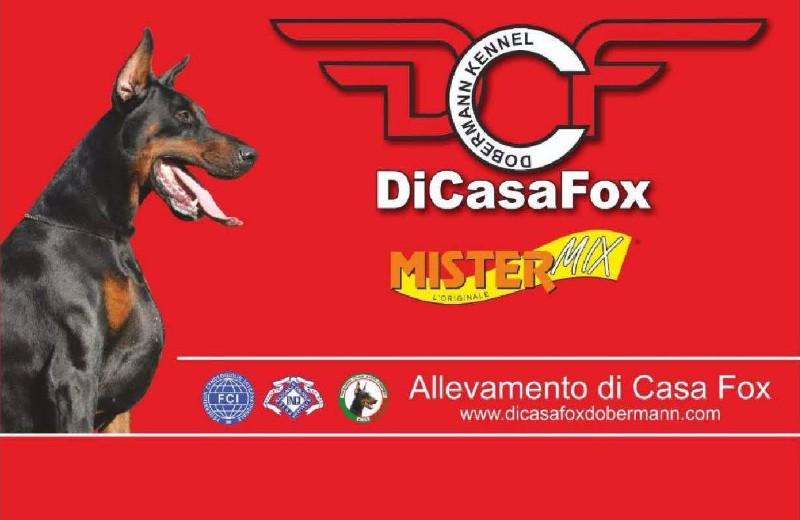 bozza_DiCasaFox