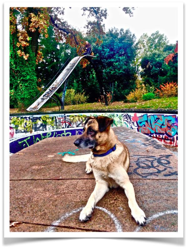 Clyde e l'agility urbana