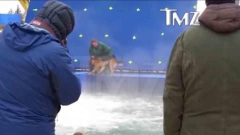 """Il terribile video del pastore tedesco costretto a buttarsi in acqua per il film """"Qua La Zampa"""""""