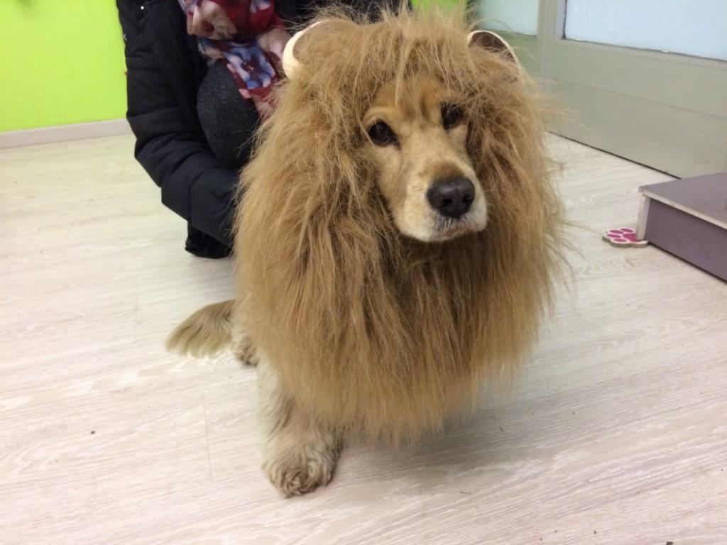 Come mascherare il proprio cane per il Carnevale Ambrosiano
