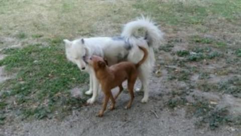Cani con disabilità: un ostacolo o una risorsa?