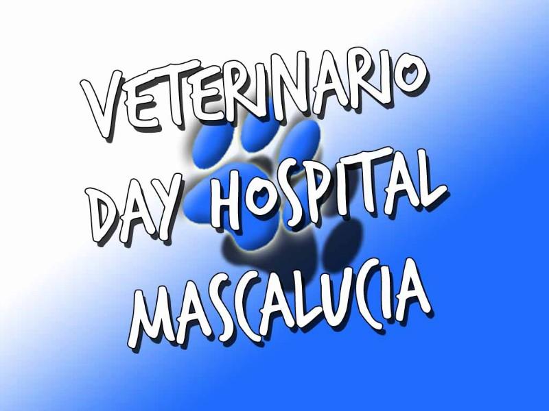 veterinario-mascalucia-sicilia-day-hospital-cane-gatto