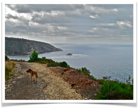 L'Isola d'Elba a quattro zampe – by Clyde