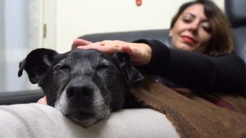 Emilia Romagna: una guida per l'adozione o l'acquisto di un cane