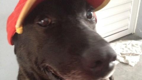 La storia di Negao, il cane benzinaio