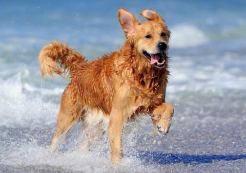 Dog Day: il Comune di Brindisi distribuisce 50 MICROCHIP GRATIS