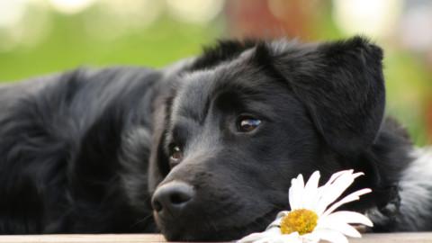 I cani ci apprezzano in base al nostro comportamento solidale con le persone