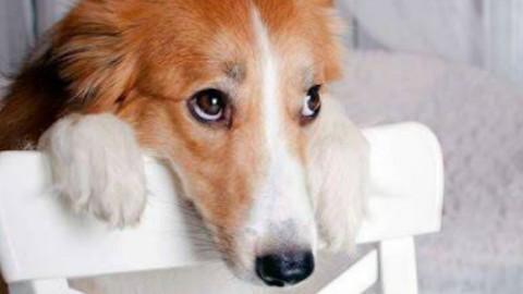 I cani fanno i finti dispiaciuti?