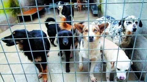 Bonus alimentare dal Comune di Terni per chi adotta un cane