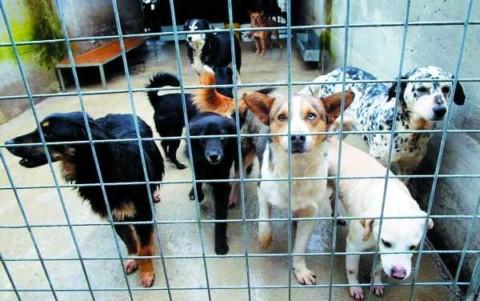 Villa Basilica, aiuto economico per chi adotta i cani