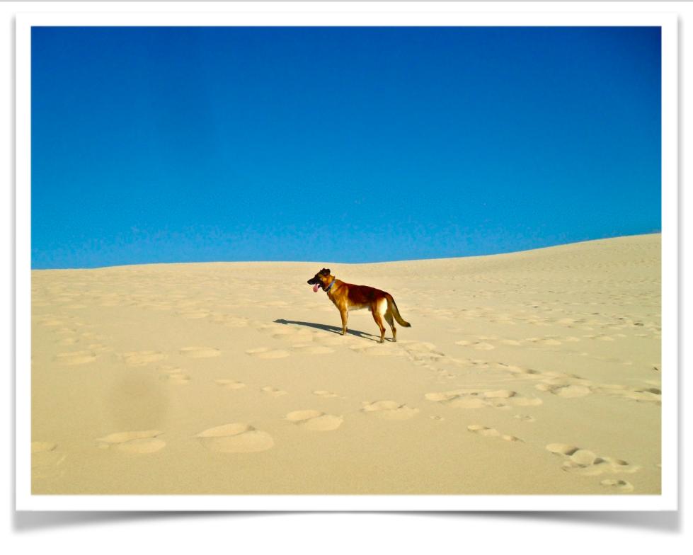 Clyde alla scoperta del deserto francese