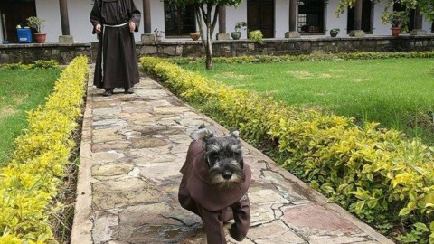 Frate Bigotòn la storia di Carmelo il primo cane diventato frate in Bolivia