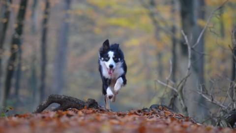 """Il """"Maltrattamento invisibile"""" del cane, una lista di comportamenti da evitare"""