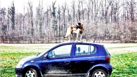 Cinestosi canina: COME CURARE il mal d'auto nel cane