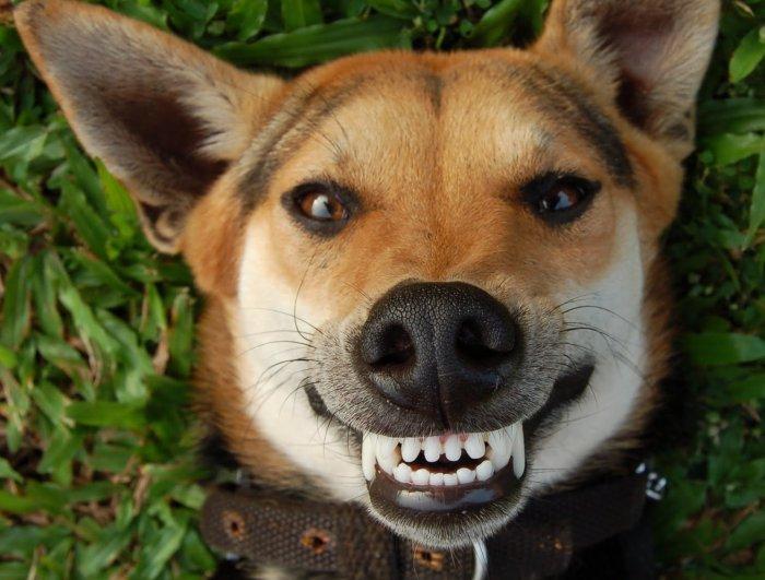 Igiene orale del cane e del gatto: a Milano una consulenza gratis