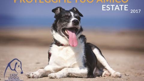 Cani ed Estate alcuni consigli per affrontare la bella stagione serenamente