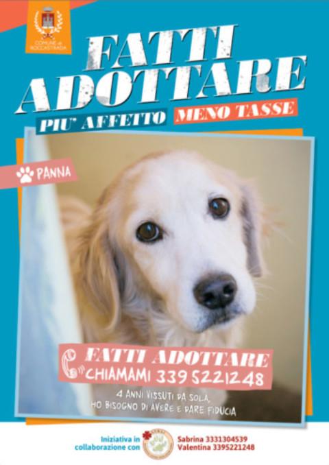 """Roccastrada : """"Più affetto, meno tasse"""" il Comune riduce la Tari se adotti un cane"""