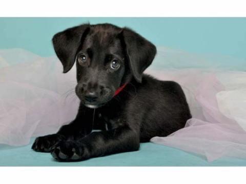 10 motivi per non adottare un cane nero