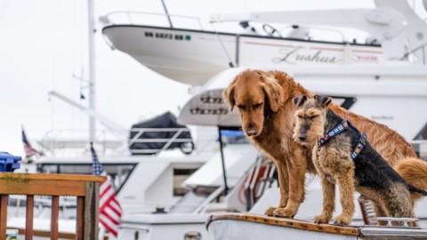 In vacanza con il cane: è una buona idea?