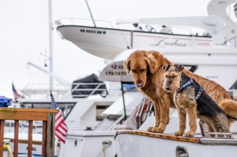In vacanza con il cane: Sì o No?