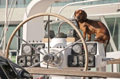 Tutto quello che devi sapere per portare in barca a vela il tuo cane