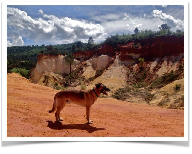 Avventura a quattro zampe nella foresta delle ocre: Il Colorado Provenzale by Clyde