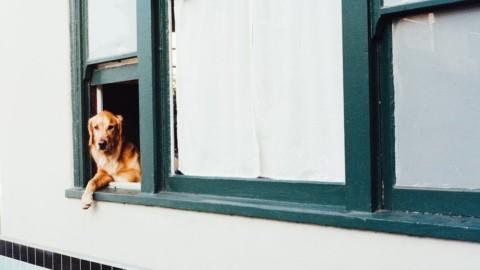 Acireale: contributi economici per chi adotta un cane